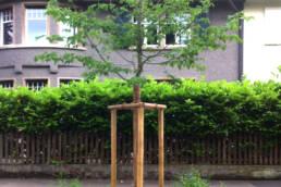 Bachmann Baumpflege Baumpflanzung Stadt