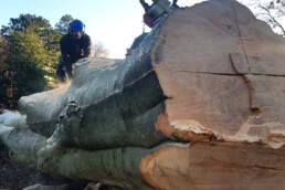 Bachmann Baumpflege Baumpflegespezialist Fällungen